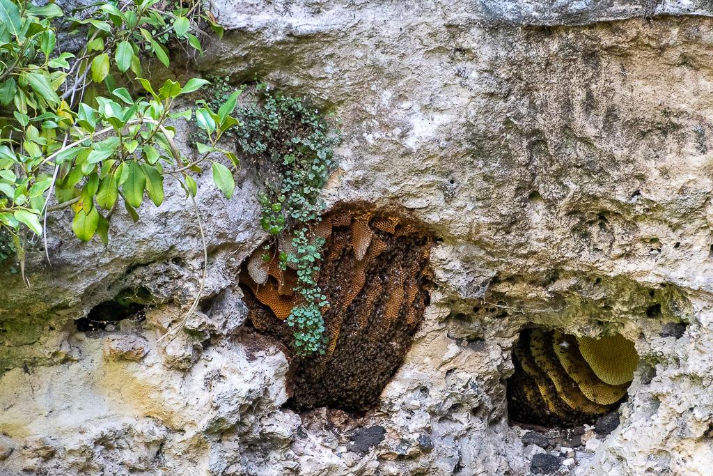Wild bee hives